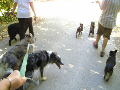 Trying to get all 6 dogs in one photo while on the trail proved to be impossible, at least in anything that didn't involve being blurry.