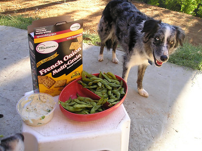 Mary also cooks up some edamame. Turns out that dogs like freshly cooked & salted edamame pods, even after we've eaten the beans out.