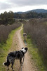 On the trail alongside new Highway 17. Boost and Tika remained on leash at all times.
