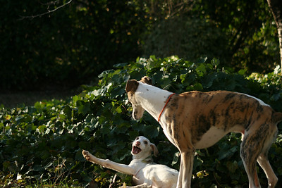 Giulia Chart Polski Puppy & Suri Playing