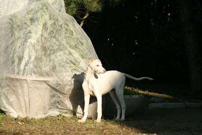 Giulia Chart Polski Puppy