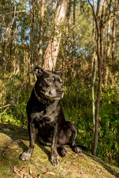 Bundy the dog