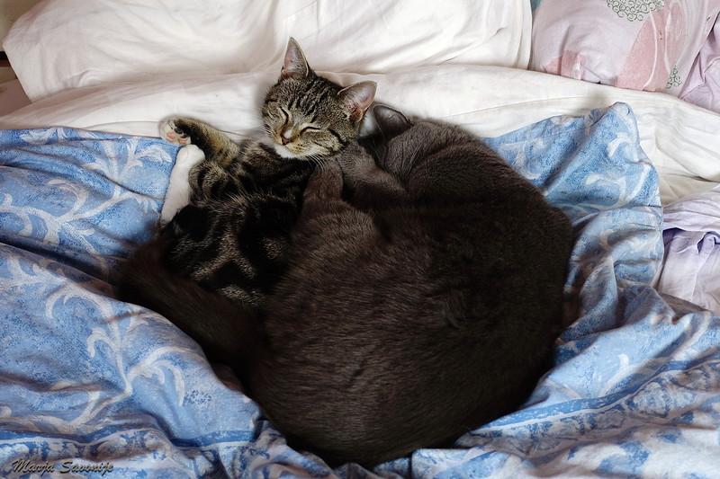 Doortje en Frank houden van elkaar