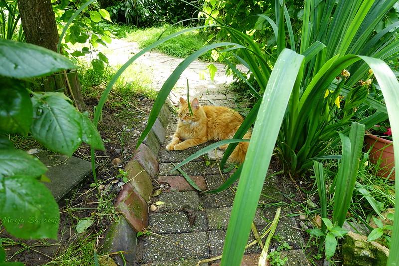 Omar in de tuin