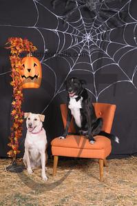 Dogaholic's Halloween 2013 100