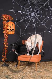 Dogaholic's Halloween 2013 096
