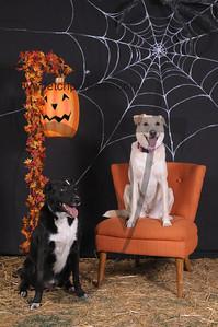 Dogaholic's Halloween 2013 104