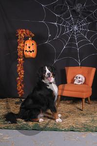 Dogaholic's Halloween 2013 116
