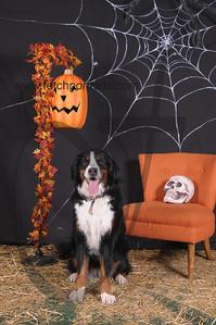 Dogaholic's Halloween 2013 112