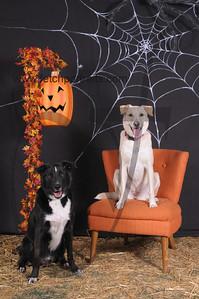 Dogaholic's Halloween 2013 106