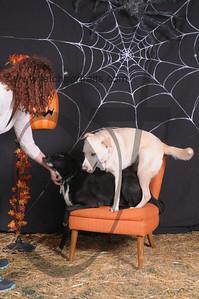 Dogaholic's Halloween 2013 094