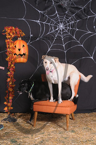 Dogaholic's Halloween 2013 095