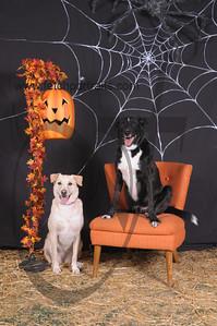 Dogaholic's Halloween 2013 099