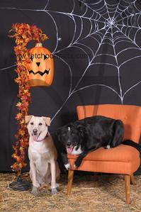 Dogaholic's Halloween 2013 102
