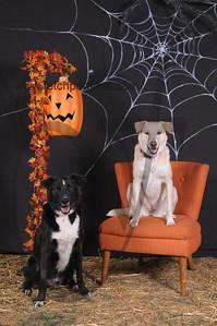 Dogaholic's Halloween 2013 107
