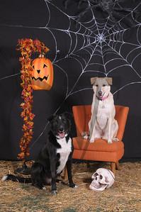 Dogaholic's Halloween 2013 109