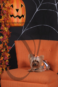 Dogaholic's Halloween 2013 122