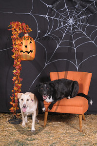 Dogaholic's Halloween 2013 103