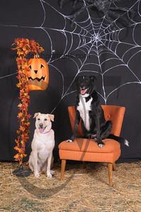 Dogaholic's Halloween 2013 098