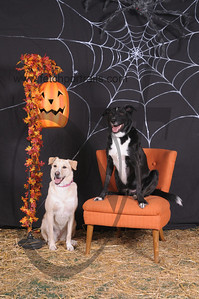 Dogaholic's Halloween 2013 097