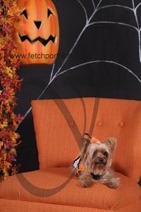 Dogaholic's Halloween 2013 118