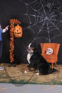 Dogaholic's Halloween 2013 115
