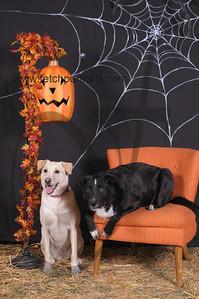 Dogaholic's Halloween 2013 101