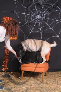 Dogaholic's Halloween 2013 093