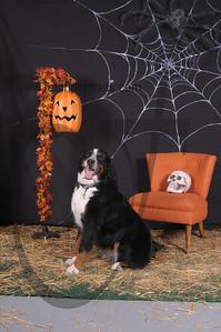 Dogaholic's Halloween 2013 114