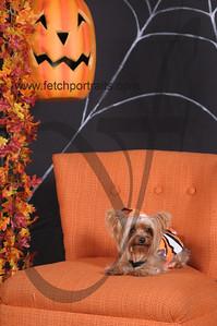 Dogaholic's Halloween 2013 120