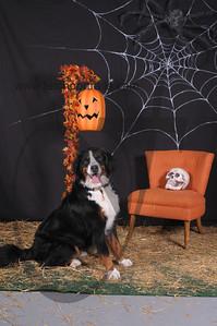 Dogaholic's Halloween 2013 113