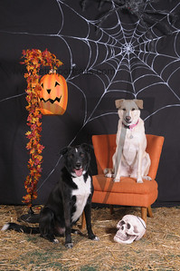 Dogaholic's Halloween 2013 110