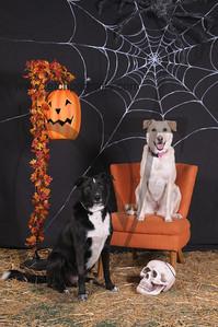Dogaholic's Halloween 2013 108
