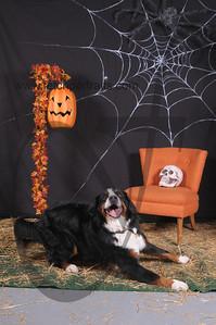 Dogaholic's Halloween 2013 117