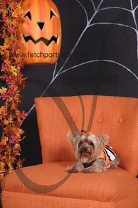 Dogaholic's Halloween 2013 123