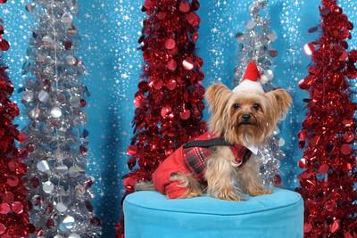 Dogaholics Santa 2013 011