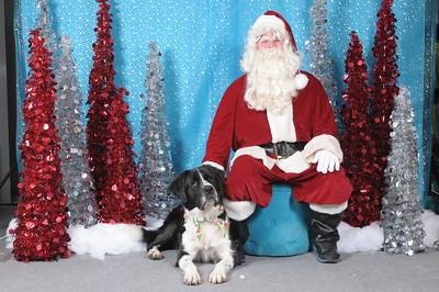 Dogaholics Santa 2013 135