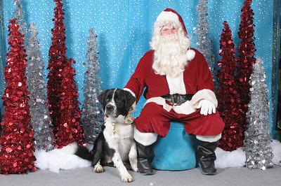 Dogaholics Santa 2013 132