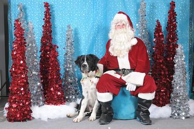 Dogaholics Santa 2013 137
