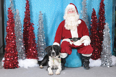 Dogaholics Santa 2013 133