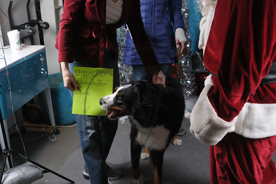 Dogaholics Santa 2013 Sunday 160