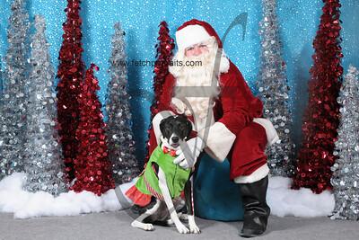 Dogaholics Santa 2013 356