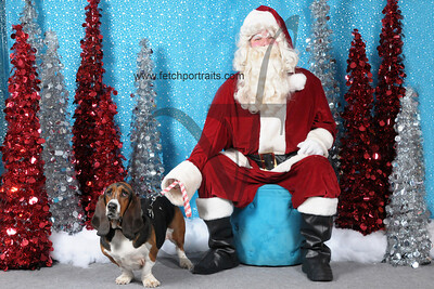 Dogaholics Santa 2013 176