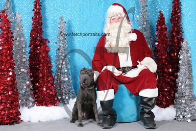 Dogaholics Santa 2013 141