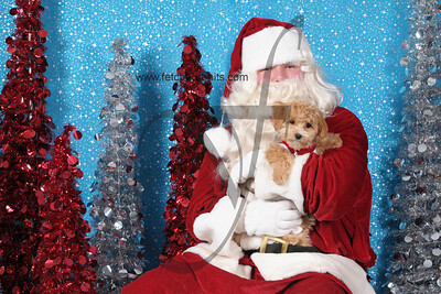 Dogaholics Santa 2013 447