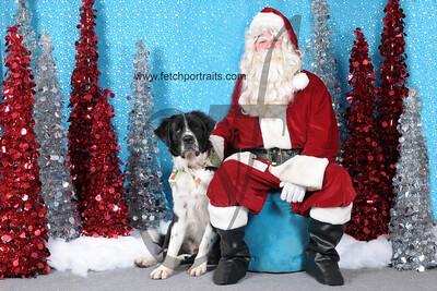 Dogaholics Santa 2013 138