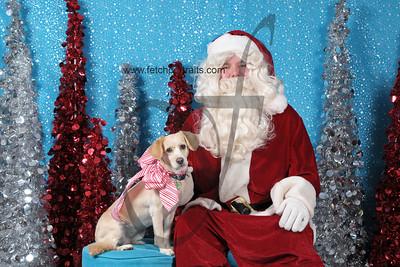 Dogaholics Santa 2013 Sunday 006