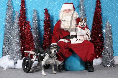 Dogaholics Santa 2013 Sunday 084