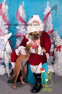 dogaholics_santa_2014 004_1