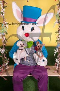 cocos canine cabana ebunny 2015 070